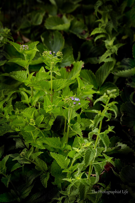 Herbs in Ashley's Garden
