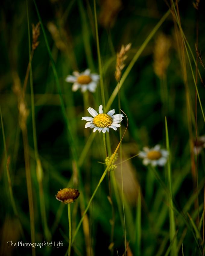 flower pl web