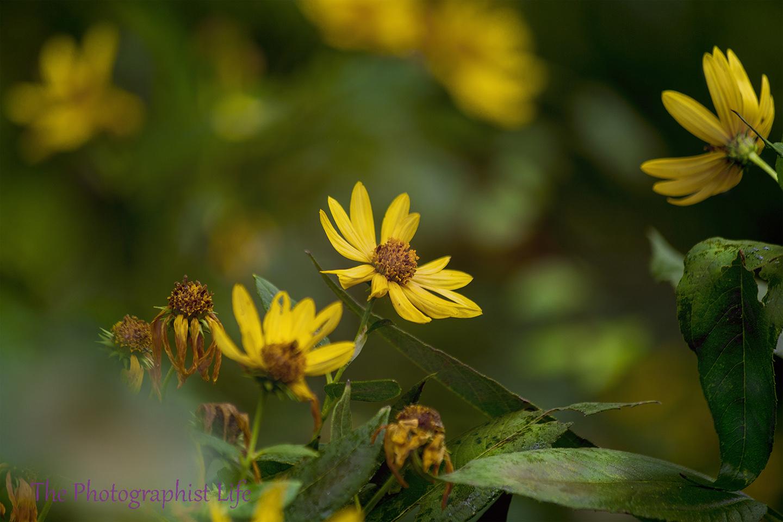 creative yellow flower web