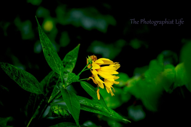 yellow flower 2 web