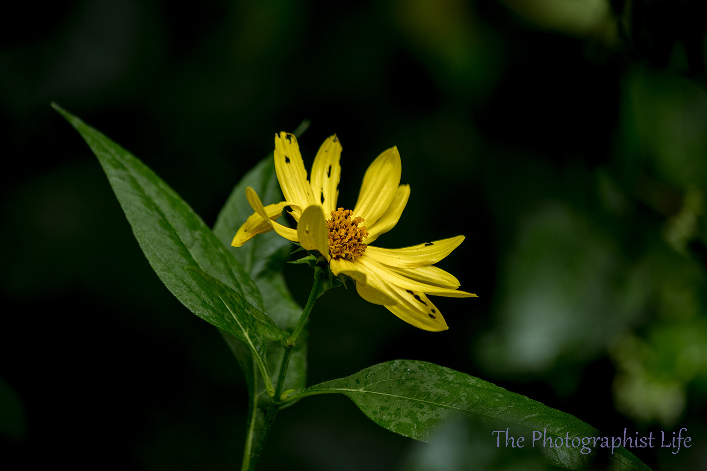 yellow flower 3 web