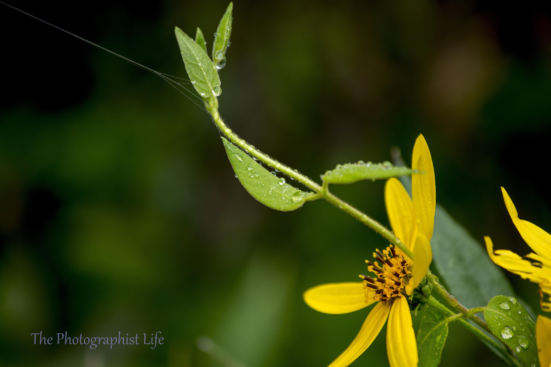 yellow web 1