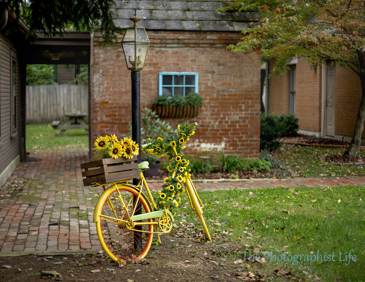 bike 1 web wm