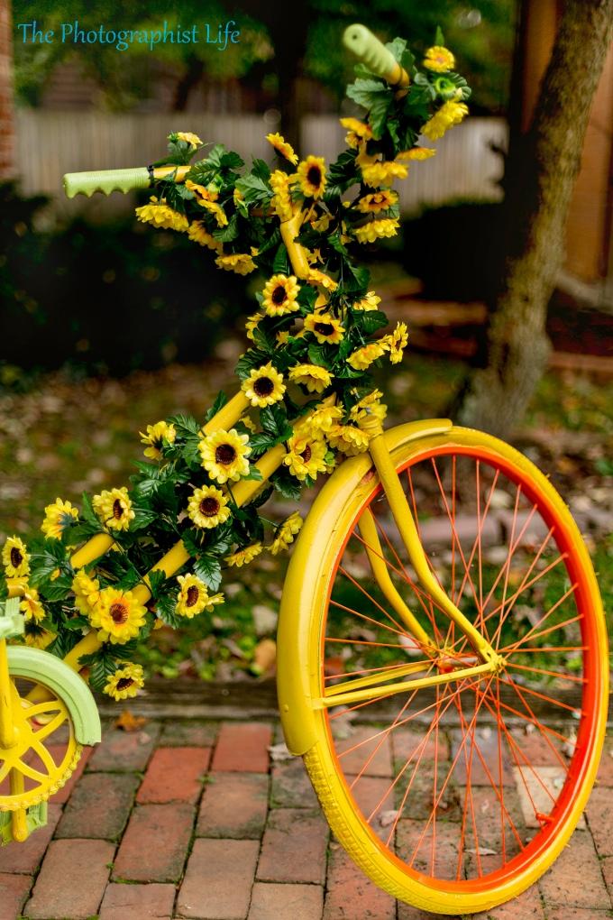 bike 11 web wm