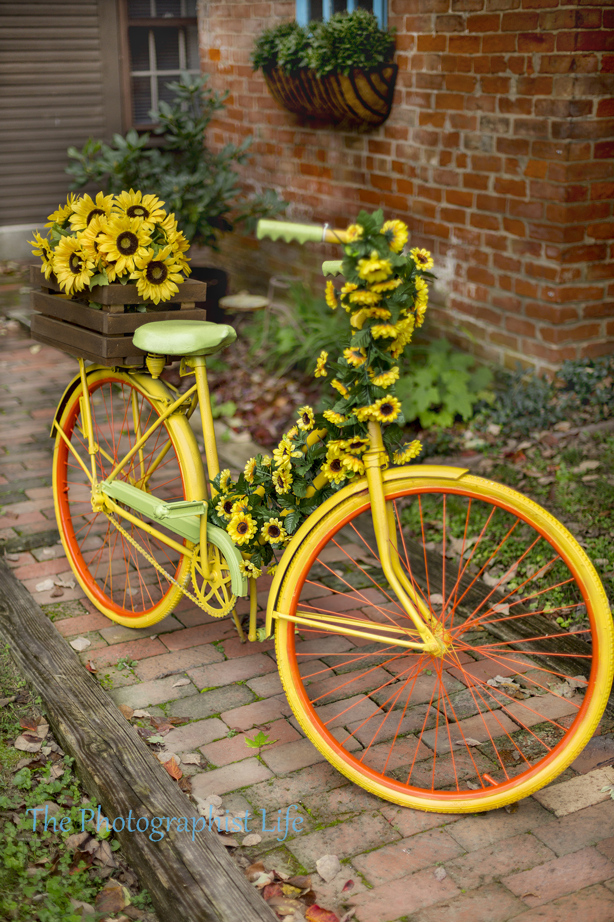 bike 13 web wm