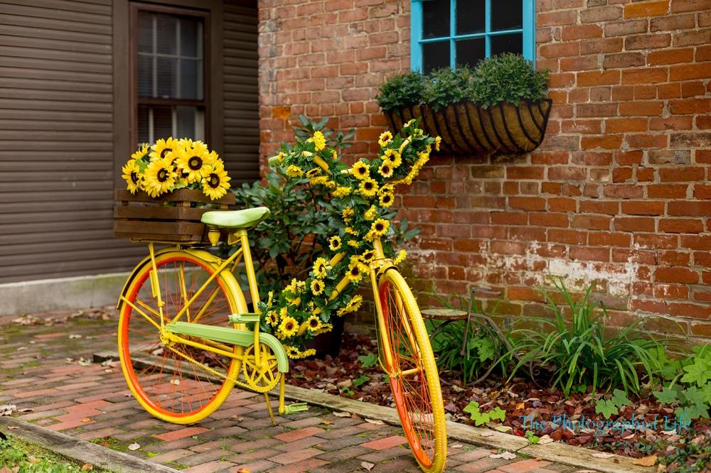 bike 4 web wm