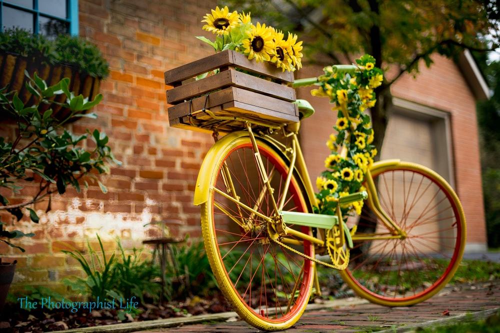 bike 5 web wm