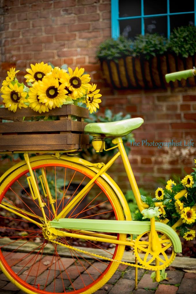 bike 6 web wm